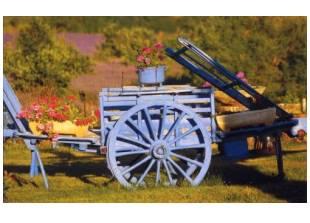 Carte postale symbole de la Provence - Cliquer pour agrandir